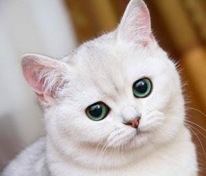 какие витамины давать кошке