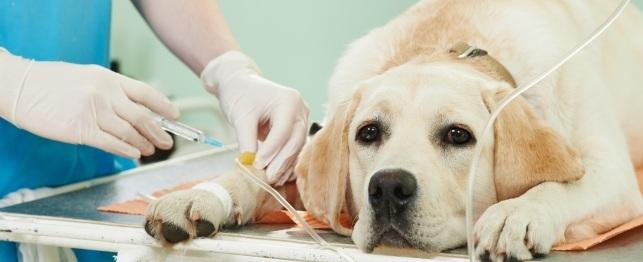 лечение собак в нашем ветеринарном центре