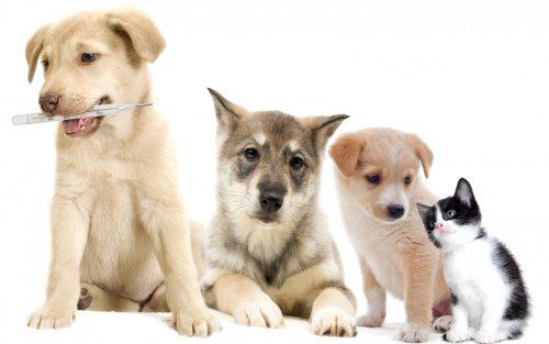 лечение животных в ветеринарной клинике