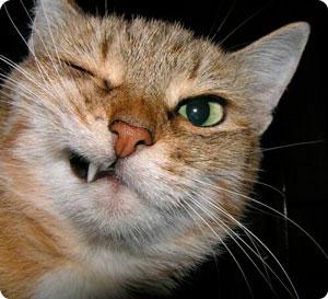 Основные болезни кошек