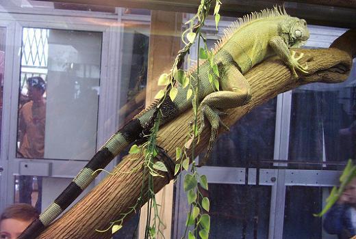 Рептилии дома