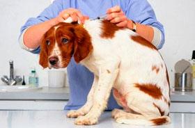 Вакцинация домашних животных в Москве