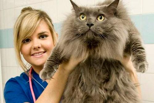 Ветеринарная помощь кошкам